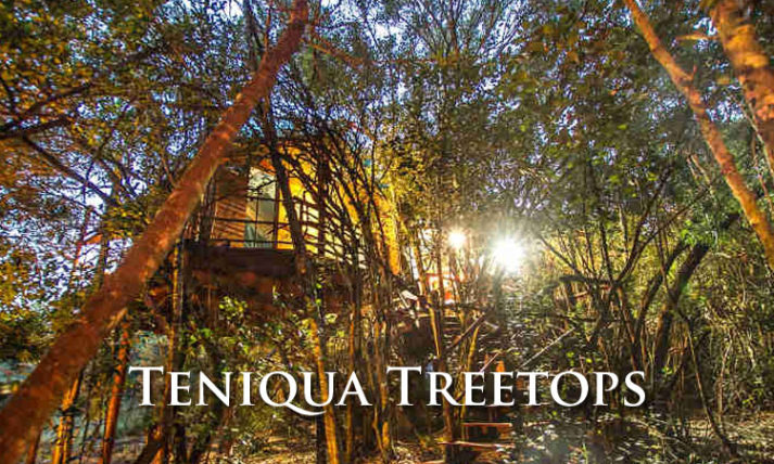 Garden-Route-Feature---Teniqua-Treetops