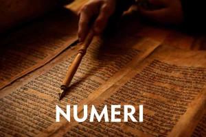 Die Bybel In N Neutedop Numeri Deur Peter Hammond