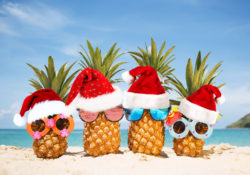 Pineapples with Christmas hats