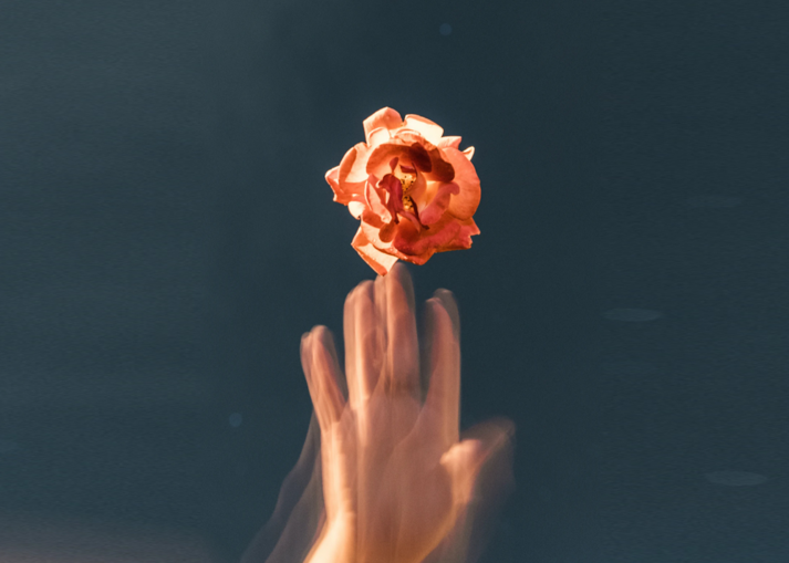 Rose and hand